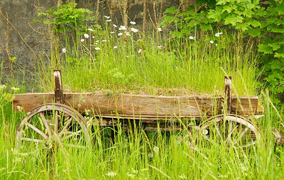 Grönskande hästvagn på Österlen